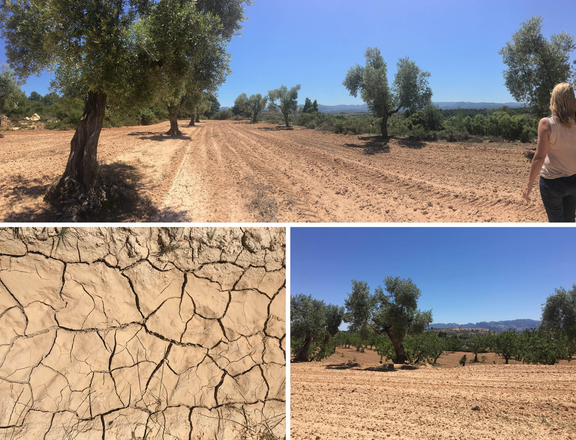 beautiful-site-matarraña-prime-property-with-a-stunning-view